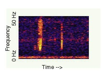 BLOOP, misteriosos sonidos submarinos