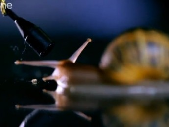 El silencio del caracol