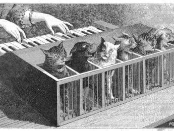 Música por y para animales