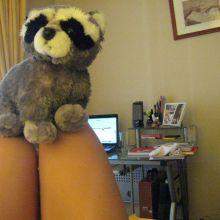 Mi mapache y yo