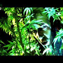 PekmeN Rasta ( Videoclip-Esta cancion te curara)2014