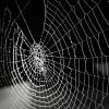 Dreamcatcher's spider