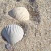 Conchas Solitarias