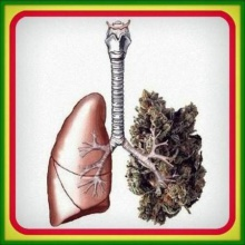 Apple THC - Pulmón de cogollo (Riddim)