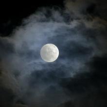 Wild Moon Piano