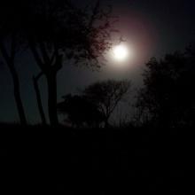 noche de blues (Sabasavila/Fankel)