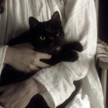 Gato completamente negro (Fankel - Monster)