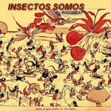 Insectos somos