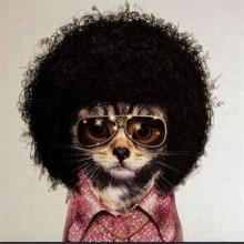 El gato que tocaba funk