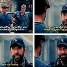 ChuckNorris vs Cobra