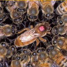 (4/10) La muerte de la abeja reina (El pequeño bosque fantástico)