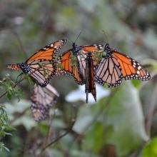 (5/10) El juego de las mariposas (El pequeño bosque fantástico)