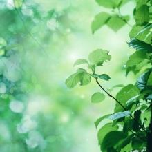 (6/10) La presencia de doña Primavera (El pequeño bosque fantástico)