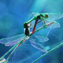 (7/10) Romance y danza de las libélulas (El pequeño bosque fantástico)