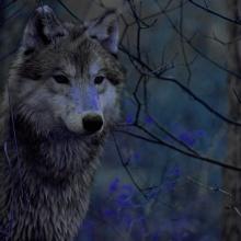 (9/10) Un sigiloso y discreto merodeador(El pequeño bosque fantástico)
