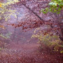 (10/10) La fiesta de la Armonía (El pequeño bosque fantástico)