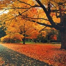 Melancholy of Fallen Leaves (2009)