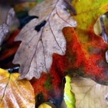 lluvia de otoño