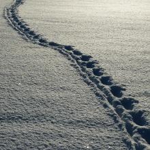 Paseo solitario de invierno