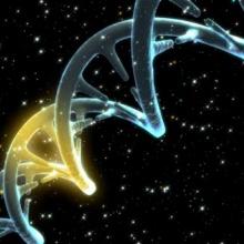 M4 - Genes