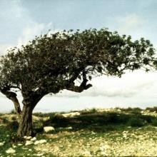 como el viento entre las ramas