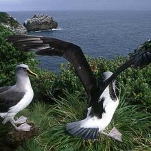 el vuelo del albatros