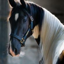 A HORSE NO NAME ELECTRO