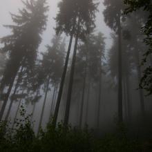 Киша ноћна шума.