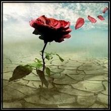 Fantasía: Una rosa en el desierto