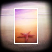 Starfish (Estrella de Mar)