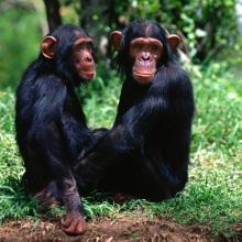 Monos confusos