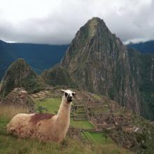 Pacha Raymi