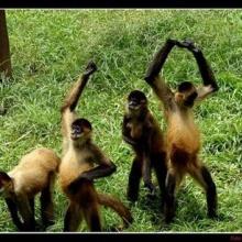 Instrumental - Bailando con monos **FREE BEAT**