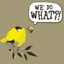 Birds By Sex
