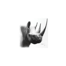 Rinocerontre