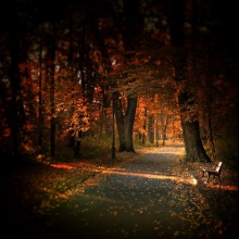 Autumn Comes II