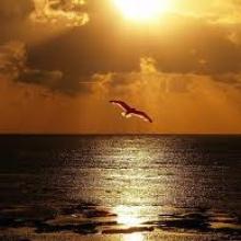 Manuel de la Torre and Angel Alcocer-For You Dance (original mix)