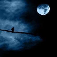 Noches de ensueño