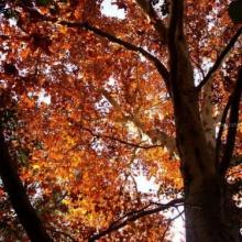 Empieza el otoño (Improvisación a piano)