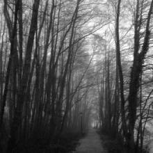 Buscando El Camino