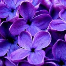 Algo huele a violetas