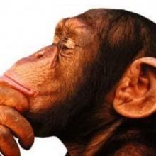 Sucio mono
