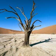DMian - La ultima Hoja del árbol (Mix X Kami)