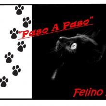 Felino 11 - Vamos Ya