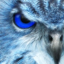The Begining Of The Universe - Firstblueowl