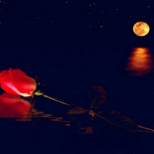 The Moonlight Rose (Suite)